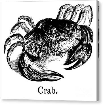 Shell Fish Canvas Print - Crab by English School