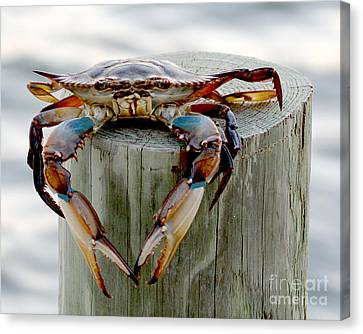 Canvas Print featuring the photograph Crab Hanging Out by Luana K Perez