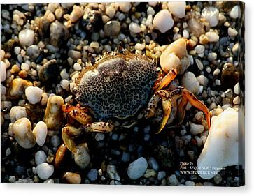 Crab On The Beach Canvas Print