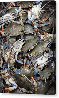 Crab Pile Canvas Print