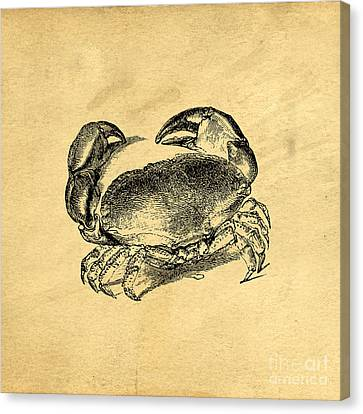 Crab Vintage Canvas Print by Edward Fielding