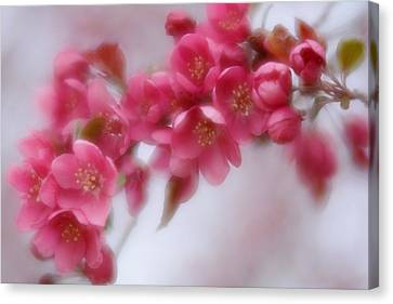 Canvas Print featuring the photograph Crabapple Blossom - Dark Pink by Diane Alexander