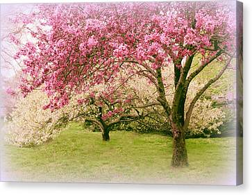 Canvas Print featuring the photograph Crabapple Confection by Jessica Jenney