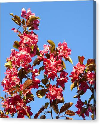 Canvas Print - Crabapple In Bloom by Will Borden