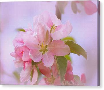 Crabapple Pink Canvas Print