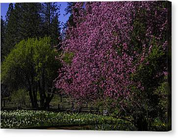 Crabapple Tree In Bloom Canvas Print by Garry Gay