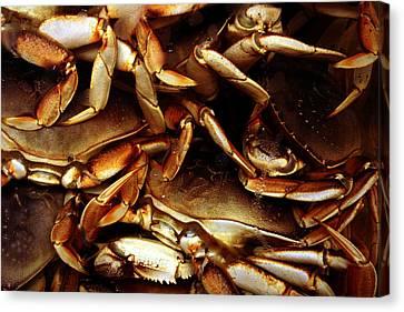 Crabs Awaiting Their Fate Canvas Print