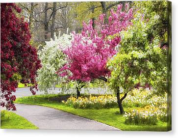 Crabtree Allee  Canvas Print by Jessica Jenney