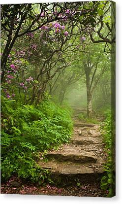 Foggy Day Canvas Print - Craggy Steps by Joye Ardyn Durham
