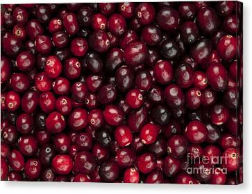 Cranberries Canvas Print by Elena Elisseeva