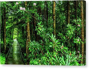 Cranberry Glades Boardwalk Canvas Print