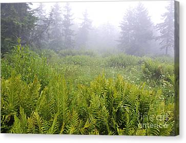 Cranberry Glades Early Morning Canvas Print by Thomas R Fletcher