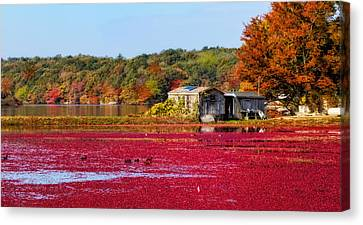 Cranberry Juice Canvas Print by Gina Cormier