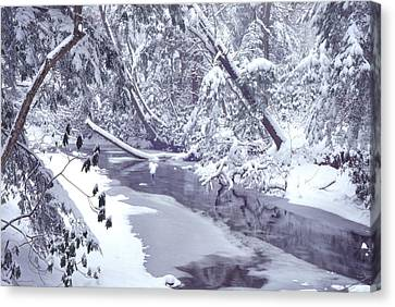 Cranberry River Winter Heavy Snow Canvas Print by Thomas R Fletcher