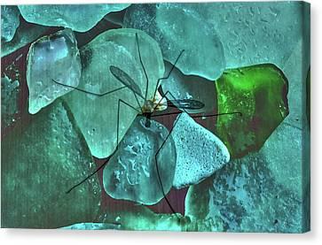 Crane Fly On Sea Glass Canvas Print