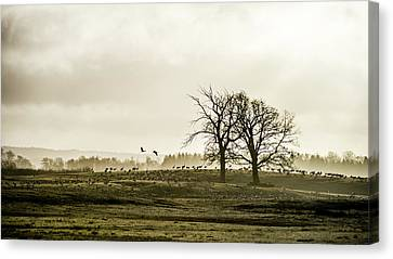 Crane Hill Canvas Print by Torbjorn Swenelius