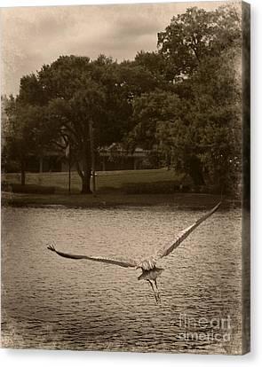 Crane In Flight Canvas Print
