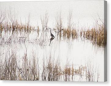Crane In Reeds Canvas Print