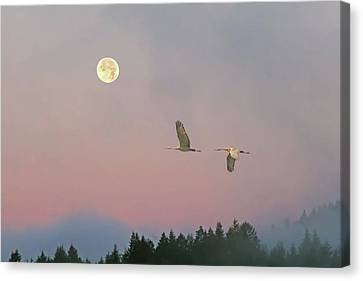Canvas Print featuring the photograph Cranes And A Full Moon At Dawn by Peggy Collins