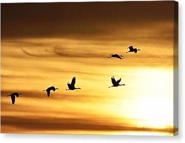 Cranes At Sunrise 2 Canvas Print