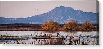 Cranes In The Morning Canvas Print