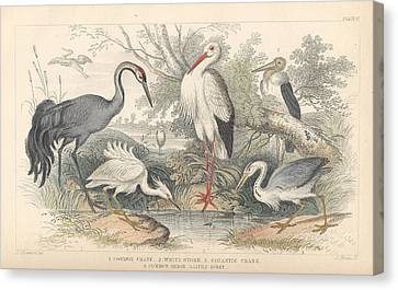Heron Canvas Print - Cranes by Dreyer Wildlife Print Collections