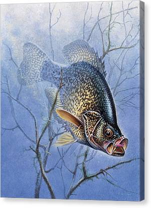 Jon Q Wright Canvas Print - Crappie Cover Tangle by JQ Licensing
