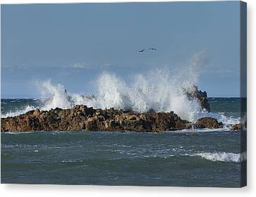 Crashing Waves And Gulls Canvas Print