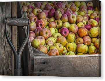 Crated Apples At The Cider Press Canvas Print by Randall Nyhof