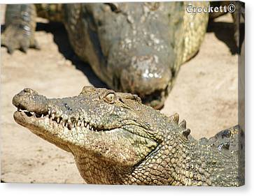 Canvas Print featuring the photograph Crazy Saltwater Crocodile by Gary Crockett