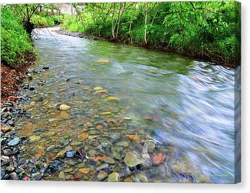 Clayton Canvas Print - Creek Of Many Colors by Donna Blackhall