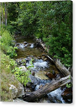 Canvas Print featuring the photograph Creek On Mt. Spokane 1 by Ben Upham III