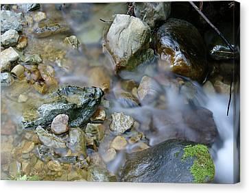 Creek On Mt Tamalpais Canvas Print by Ben Upham III