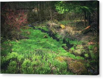 Creek - Spring At Retzer Nature Center Canvas Print by Jennifer Rondinelli Reilly - Fine Art Photography