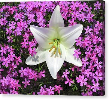 Creeping Fuchsia Phlox With Lily Canvas Print