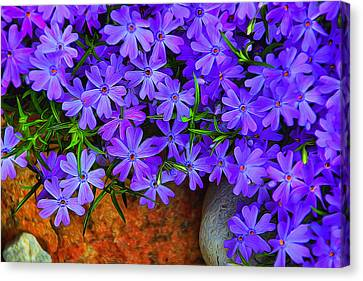 Creeping Phlox 1 Canvas Print by Dennis Lundell
