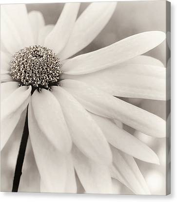 Canvas Print featuring the photograph Creme Fraiche In Black And White by Darlene Kwiatkowski