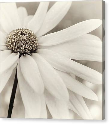 Canvas Print featuring the photograph Creme Fraiche In Gold And White by Darlene Kwiatkowski