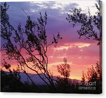 Creosote Sky Canvas Print by Suzette Kallen