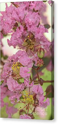 Crepe Myrtle And Bee Canvas Print by Olga Hamilton