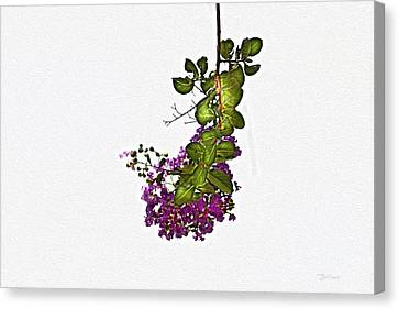 Crepe Myrtle In Oil Canvas Print