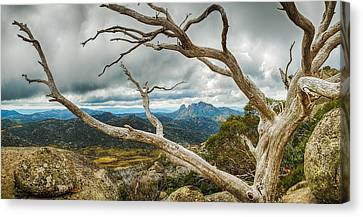 Cresta Valley - Mt Buffalo Canvas Print by Mark Lucey