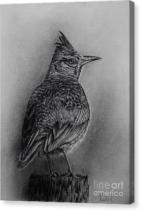 Crested Lark  Canvas Print