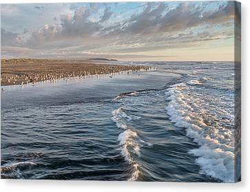 Canvas Print featuring the photograph Crests And Birds by Greg Nyquist