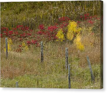Crimson And Gold Canvas Print
