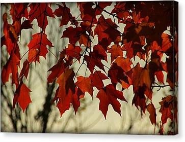 Canvas Print featuring the photograph Crimson Red Autumn Leaves by Chris Berry