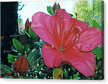 Canvas Print featuring the photograph Crimson by Larry Bishop