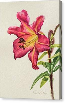 Crimson Lilies Canvas Print - Crimson Lily 1 by Fiona Craig