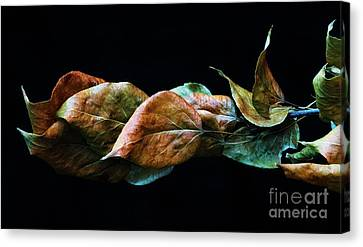 Crinkled Leaves 2 Canvas Print
