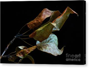 Crinkled Leaves 3 Canvas Print